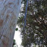 Hurtaron cien metros de cable de cobre frente a la C.A.L.O.