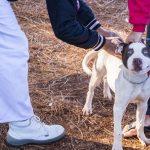 Vacunaron caninos y felinos en el barrio Cien Hectáreas