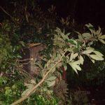 Un árbol cayó sobre dos viviendas y dejó 2 heridos en Oberá
