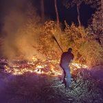 Un detenido por un incendio que consumió cerca de 10 hectáreas de pino y eucaliptus