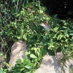 Recuperaron 500 kilos de yerba mate robados en el lote 73