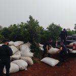 Atraparon a tres hombres que robaron yerba mate canchada de un depósito en Oberá
